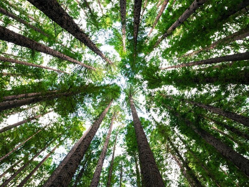 Environnement - Développement durable